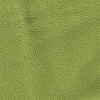 Colore kiwi